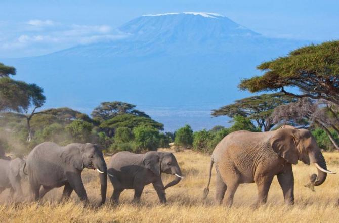 africa_kenya_elephant_family_kilimanjaro_4