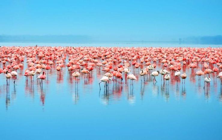 africa_kenya_lake_nakuru_flocks_of_flamingo