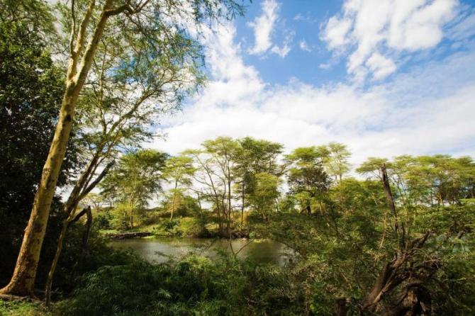 africa_kenya_mzima_springs_in_tsavo_national_park