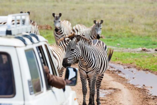 africa_kenya_zebras_on_the_road
