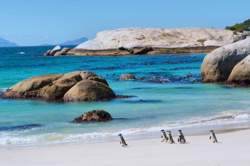 africa_south-africa-cape-town-penguins-beach