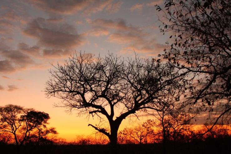 africa_south_africa_sunset_in_sabi_sand_reserve