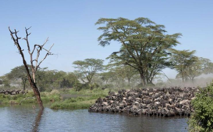 africa_tanzania_herds_of_wildebeest_at_the_serengeti_national_park_0