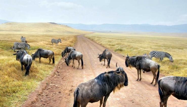 africa_tanzania_kenya_serengeti_arusha_wildebeest_migration_in_east_africa_0