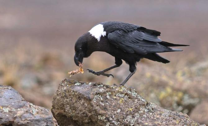 africa_tanzania_kilimanjaro_feeding_the_black_birds_on_the_slopes_of_kilimanjaro_in_bad_weather_0
