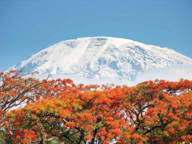 africa_tanzania_kilimanjaro_uhuru_peak_flowers