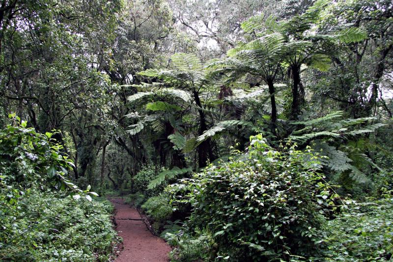 africa_tanzania_machame_trail_near_the_machame_gate_in_the_kilimanjao_national_park_0