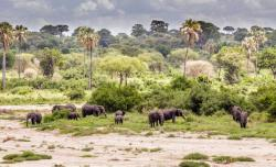 africa_tanzania_tarangire_agroup_od_african_elephants
