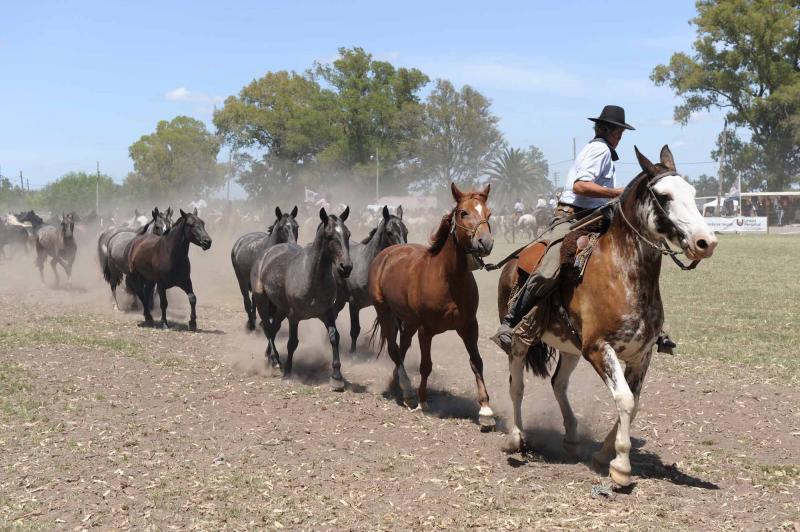 argentina-buenos-aires-gaucho-rides-horses