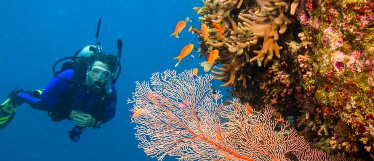 australia-great-barrier-reef-scuba-diver-and-corals-panorama-h1