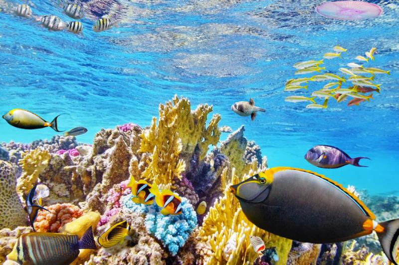 australia_great_barrier_reef_clear_fishes