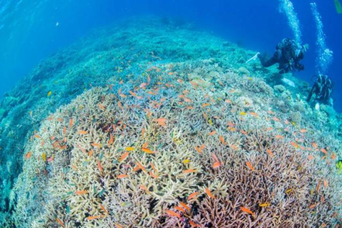 australia_great_barrier_reef_nice_view_0