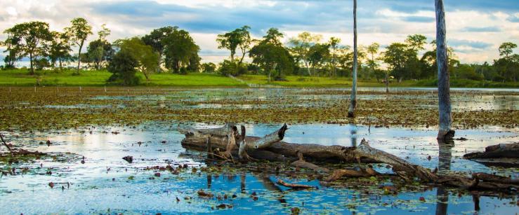 Brazil-Pantanal-Aquatic-Landscape-LT-Header