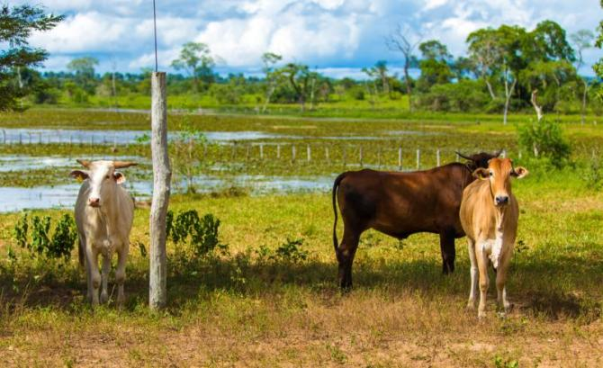 brazil-pantanal-wetlands-domestic-wildlife_0