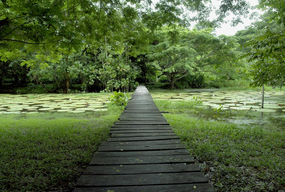 Brazil_Amazon_Tour_Amazon_Jungle_-_amazon_mystery_lost_world