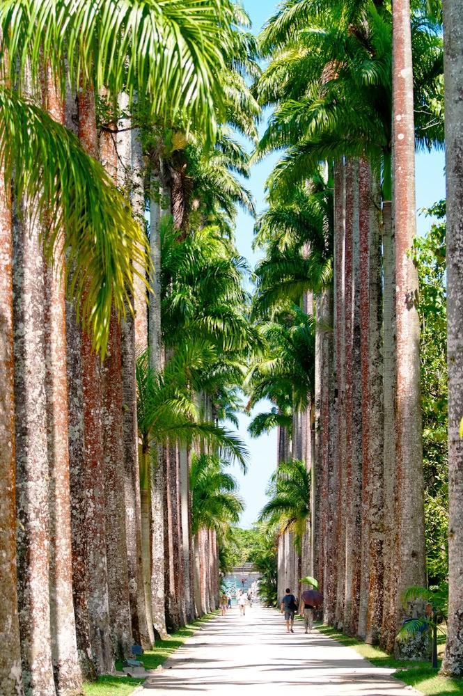 brazil_rio_de_janeiro_tour_the_palm_alley_at_botanical_garden_copy