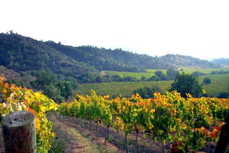 chile_casablanca_tour_merlot_grapes_vineyard_0