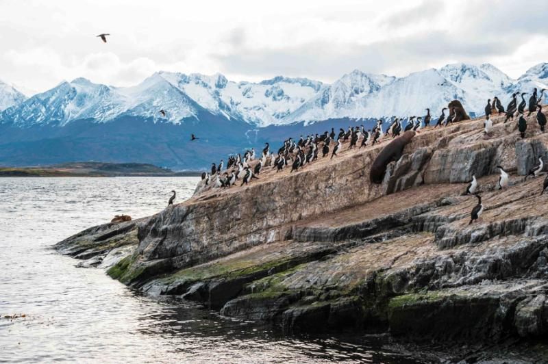 chile_sea_lion_and_king_cormorant_colony_sits_on_an_island_in_the_beagle_channel_tierra_del_fuego_argentina_-_chile