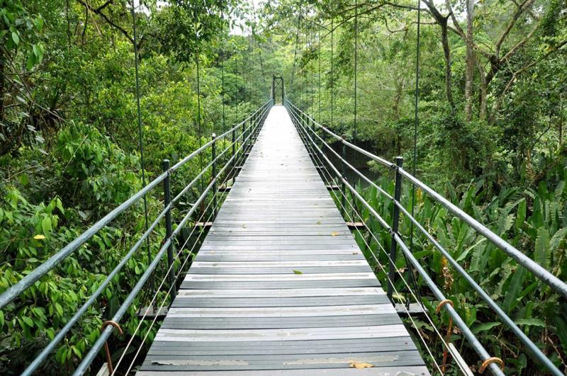 costa-rica-bridge-in-jungle