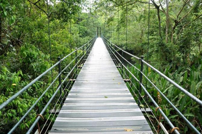 costa-rica-bridge-in-jungle_0