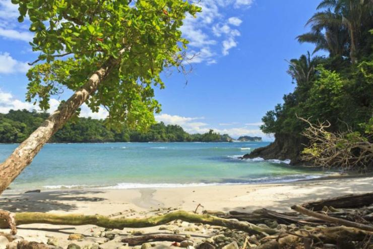 costa-rica-manuel-antonio-national-park-beach-tree1
