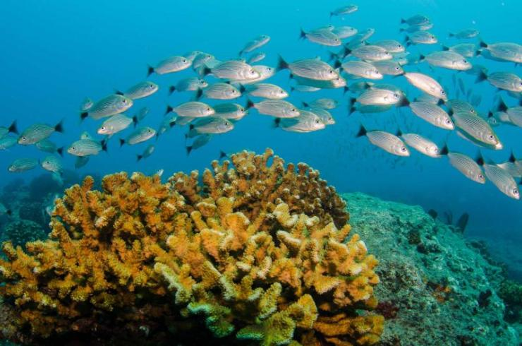 costa_rica_baja_reef_fish