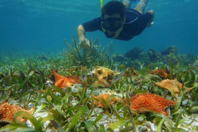 costa_rica_man_in_snorkel_underwater_looks_starfish_with_a_queen_conch_on_the_seabed_1