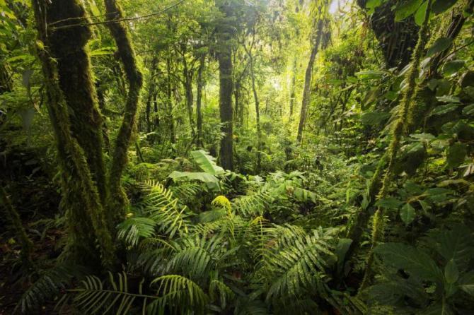 costa_rica_monte_verde_cloud_forest_dense_vegetation_