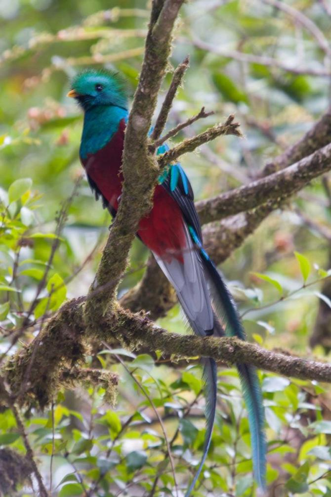 costa_rica_quetzal_1