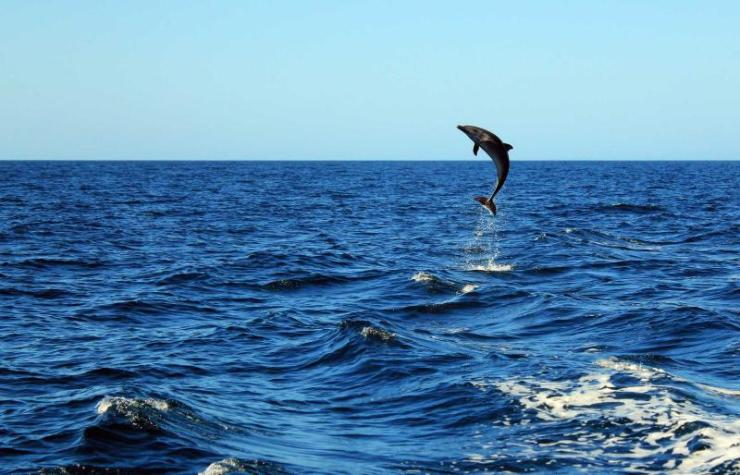 costa_rica_tamarinho_beach_dolphin