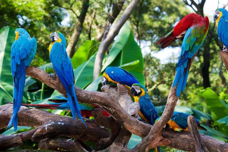 Ecuador_Amazon_Tour_Macawsjpg