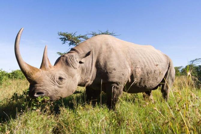 kenya-masai-mara-national-park-rhino