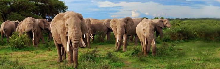 kenya_elephant_h2