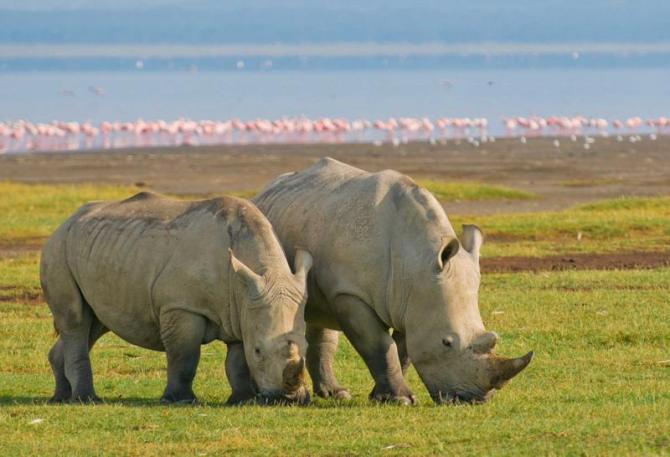 kenya_lake_nakuru_np_tour_rhinos