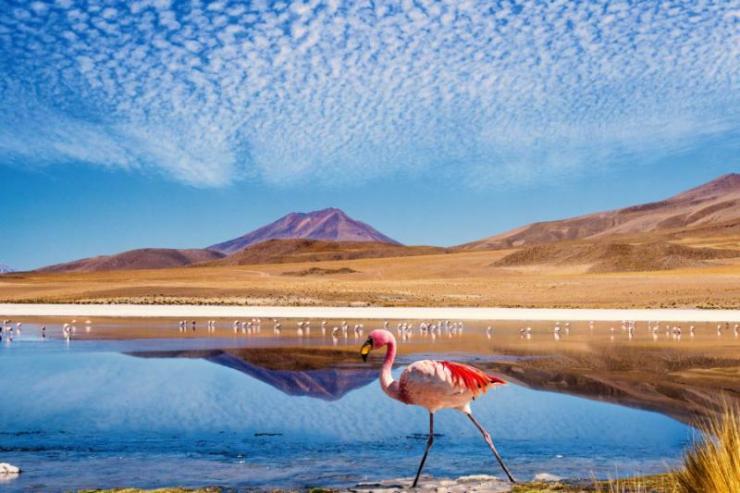 laguna_at_the_quotruta_de_las_joyas_altoandinasquot_in_bolivia_with_pink_flamingo_walking_through_the_scene