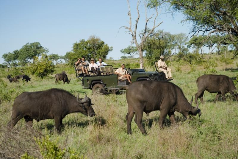 south-africa-kruger-national-park-african-buffaloes_0
