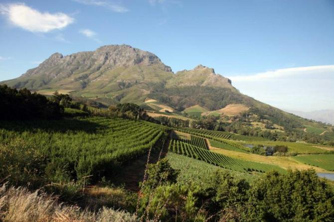 south_africa_stellenbosch_tour_vineyard_and_mountain_view_0