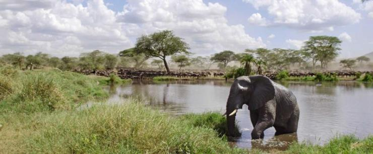 tanzania-serengeti-national-park-elephant-in-river-pano