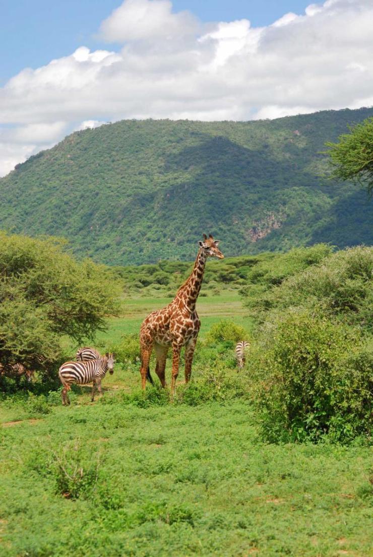 tanzania_lake_manyara_tour_giraffe_-_bobby_tours_0