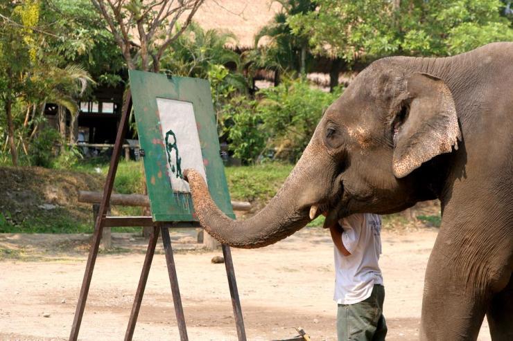Thailand_Chiang_Mai_Tour_Drawing_Elephant_-_Buffalo_Colors_of_Asia