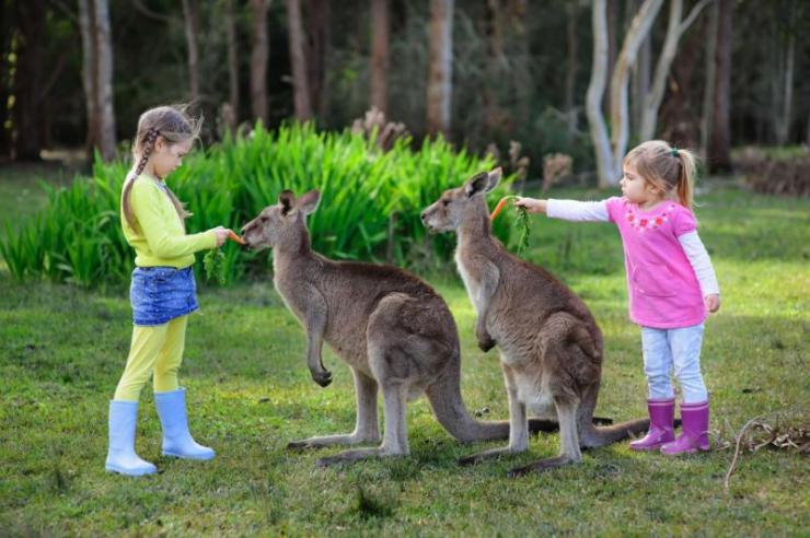 two_kids_in_the_zoo_feeding_kangaroo_0
